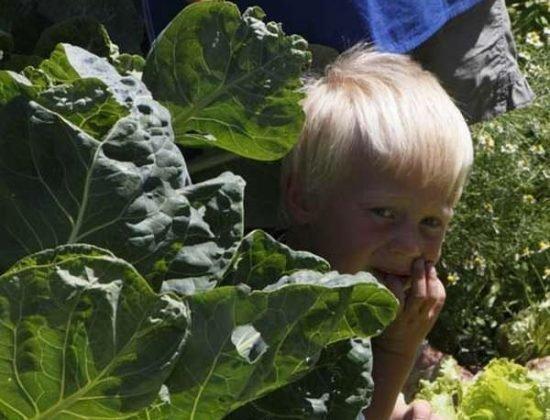 Farm holidays for kids at the farm - South Tyrol